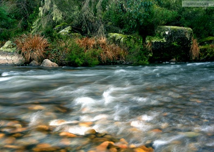 Murray River, Tom Groggin, Kosciuszko National Park, NSW/VIC