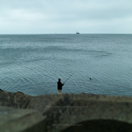 The optimistic and patient cormorant - Leica M9