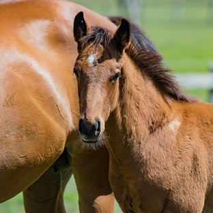 Warrandale Stud 2017 Foals