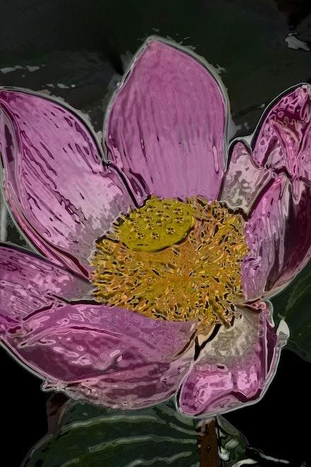 Glass Lotus