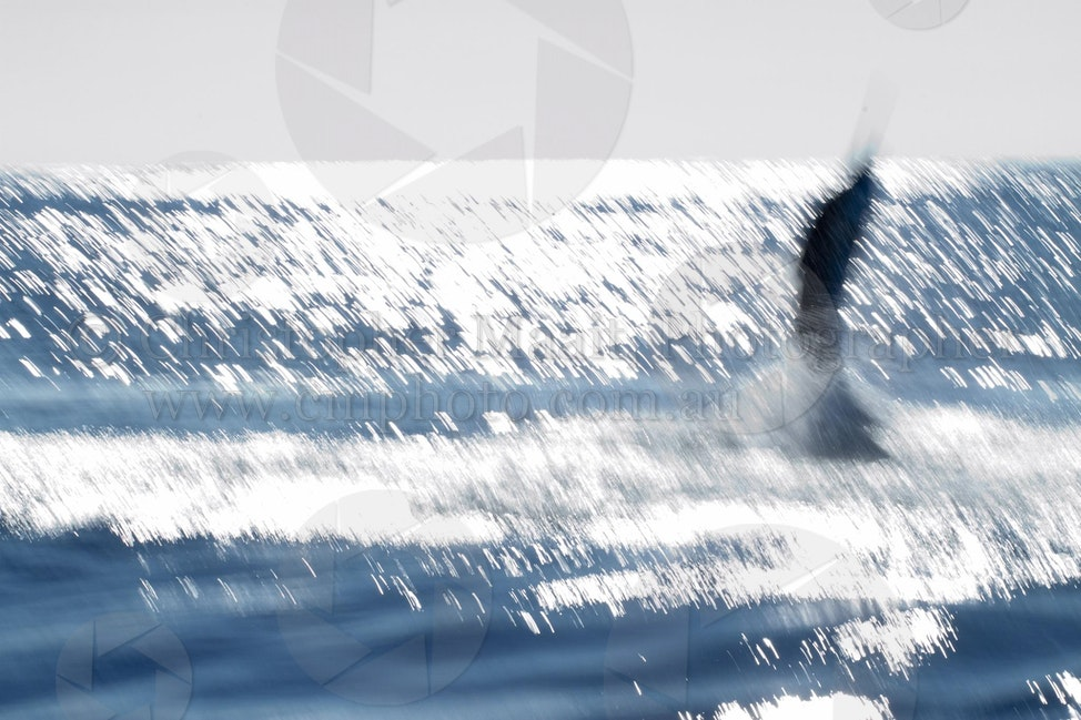 Marlin Magic