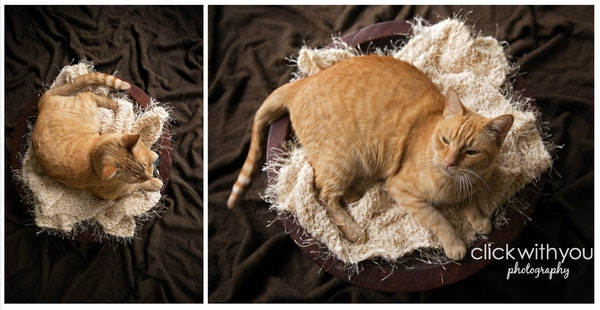 Oscar Cat Newborn Inspired Portrait