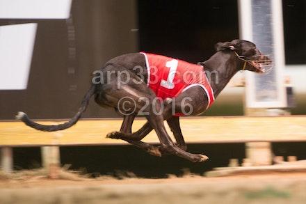 Greyhounds 071015-7