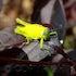 grasshoper - GRASS HOPER