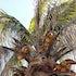 Coconut Cache