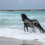 Beach with Horses - Horses & the Beach