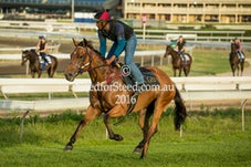 24 DEC 16 RANDWICK TRACK WORK