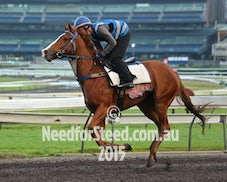 23 APRIL RANDWICK TRACK WORK