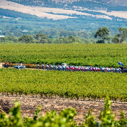 The Peloton over vineyards