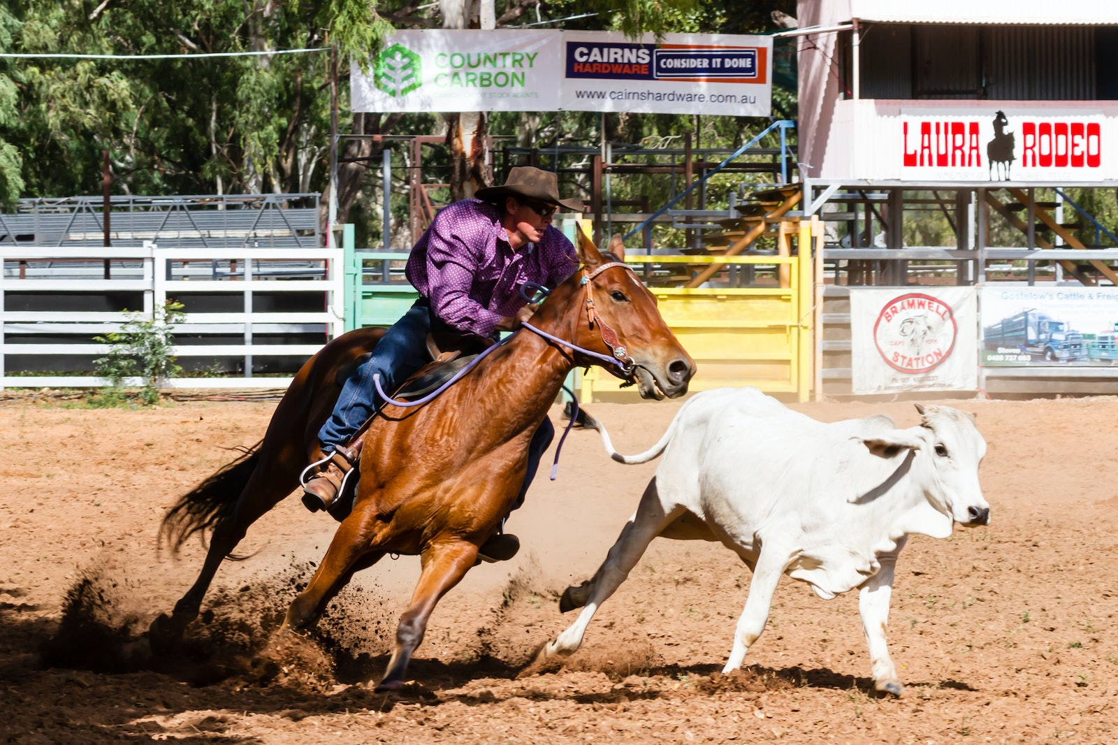 2017 - Laura Campdraft and Rodeo - 20170623 - 496