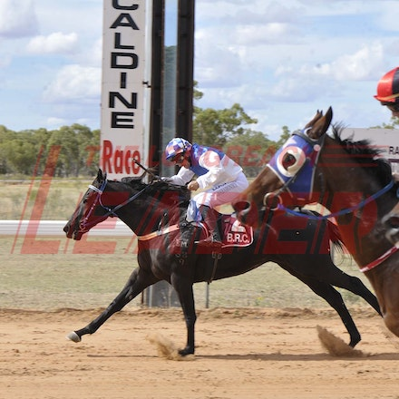 160430_SR25412 - Race 2 at the Tree of Knowledge Cup Race day in Barcaldine, Saturday April 30, 2016.  sr/Photo by Sam Rutherford