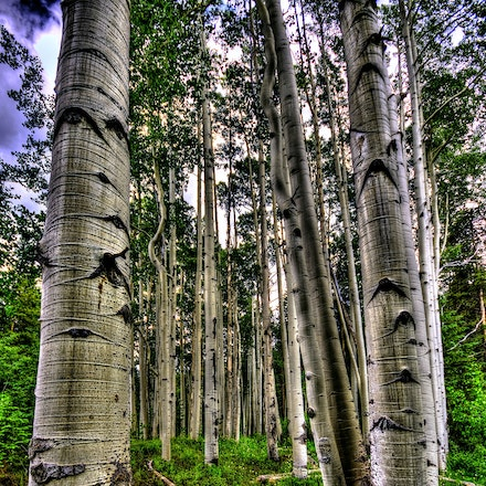 Woods 7.10.2015.7 - Woods. A cluster of aspens reach toward the summer sky in Vail, Colorado. #tree #trees #vail #colorado #aspens #forest #rockymountains 7.10.2015.7