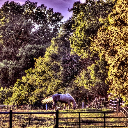 Fence Line 10.5.2014.2 - Fence Line. An old three board fence on a Roca, Nebraska pasture ensures this horse doesn't wander too far with her grazing. Lancaster...
